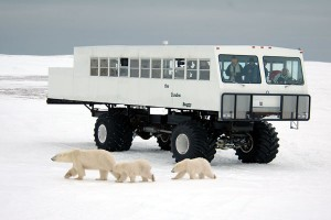 The Polar Bears of Churchill, Manitoba